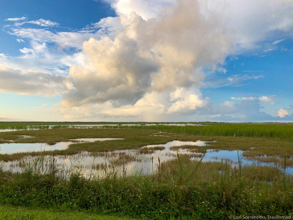 The beginning of the Florida Everglades