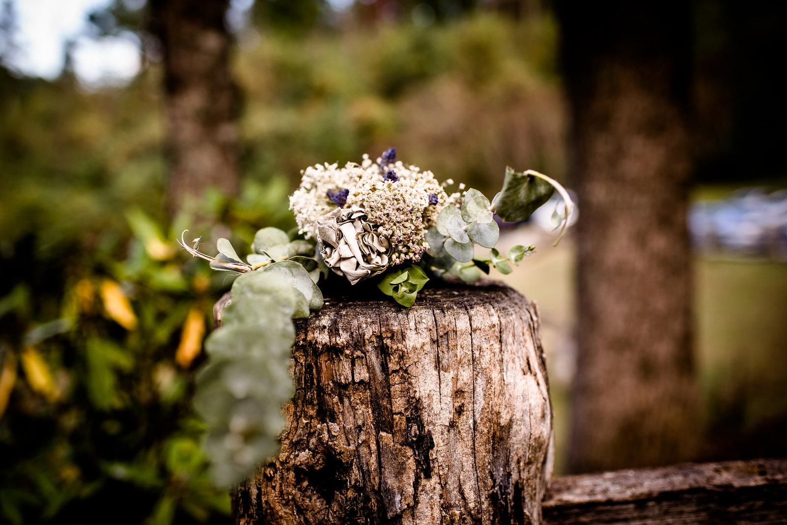 relaxed-backyard-wedding-asheville_Wedding-380.jpg