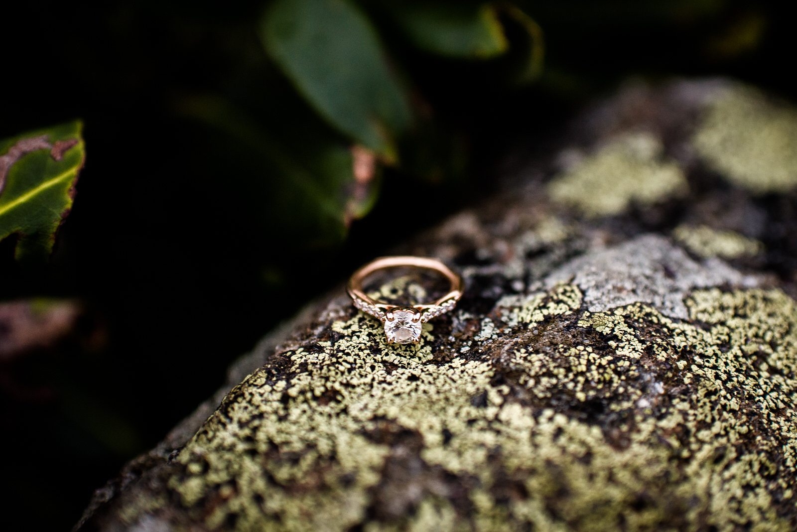 Craggy-Gardens-Engagement-Session-91.jpg