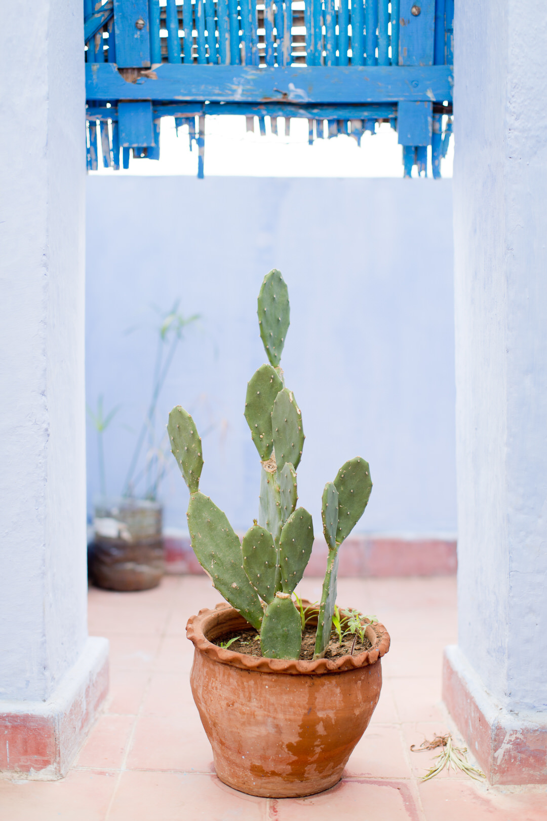 Melissa Kruse Photography - Chefchaouen Morocco (web)-43.jpg