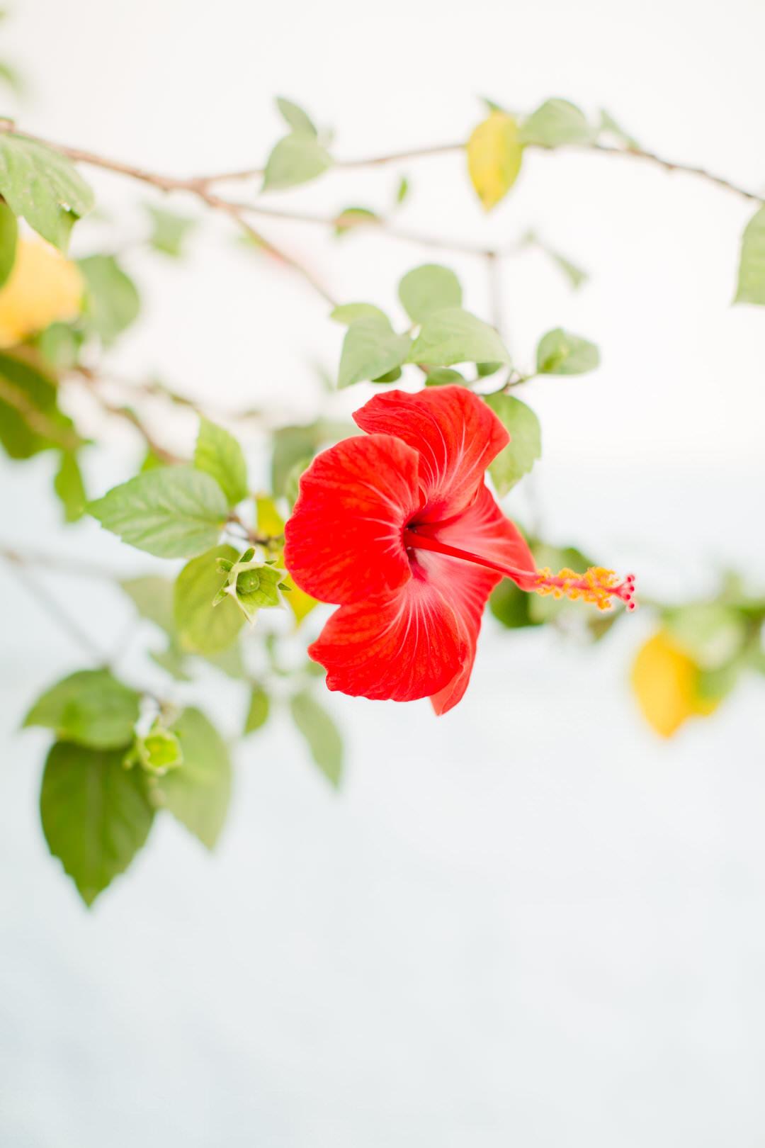 Melissa Kruse Photography - Asilah Morocco (Web)-9.jpg