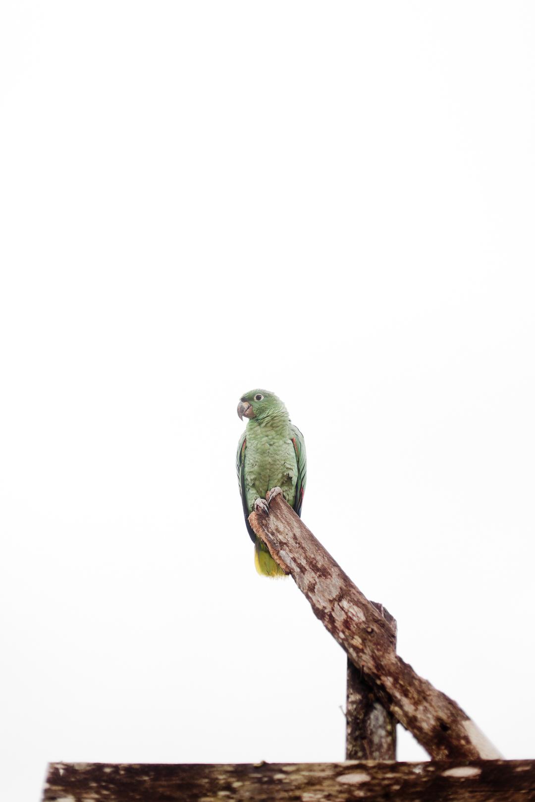 melissa kruse photography - chinimp tuna station, amazon, ecuador-38.jpg