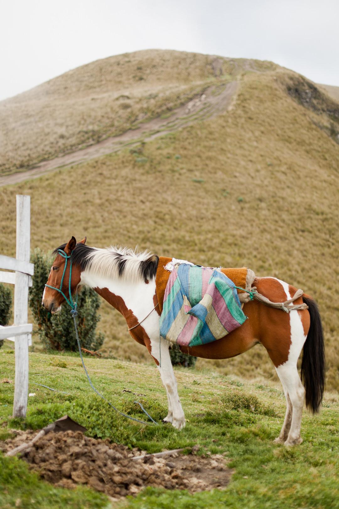 melissa kruse photography - quito, ecuador-18.jpg