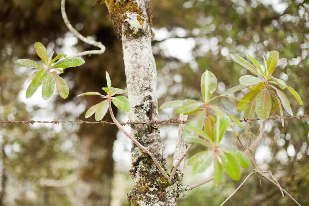 melissa kruse photography - Banos, Ecuador-54.jpg