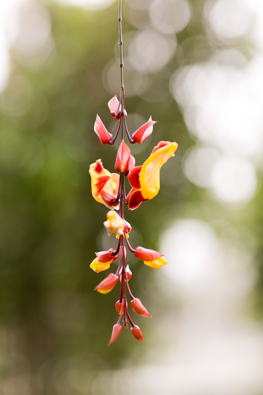 Melissa Kruse Photography - New York Botanical Garden Orchid Show-14.jpg