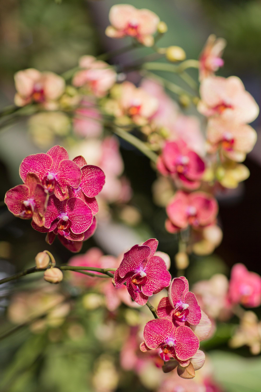 Melissa Kruse Photography - New York Botanical Garden Orchid Show-57.jpg