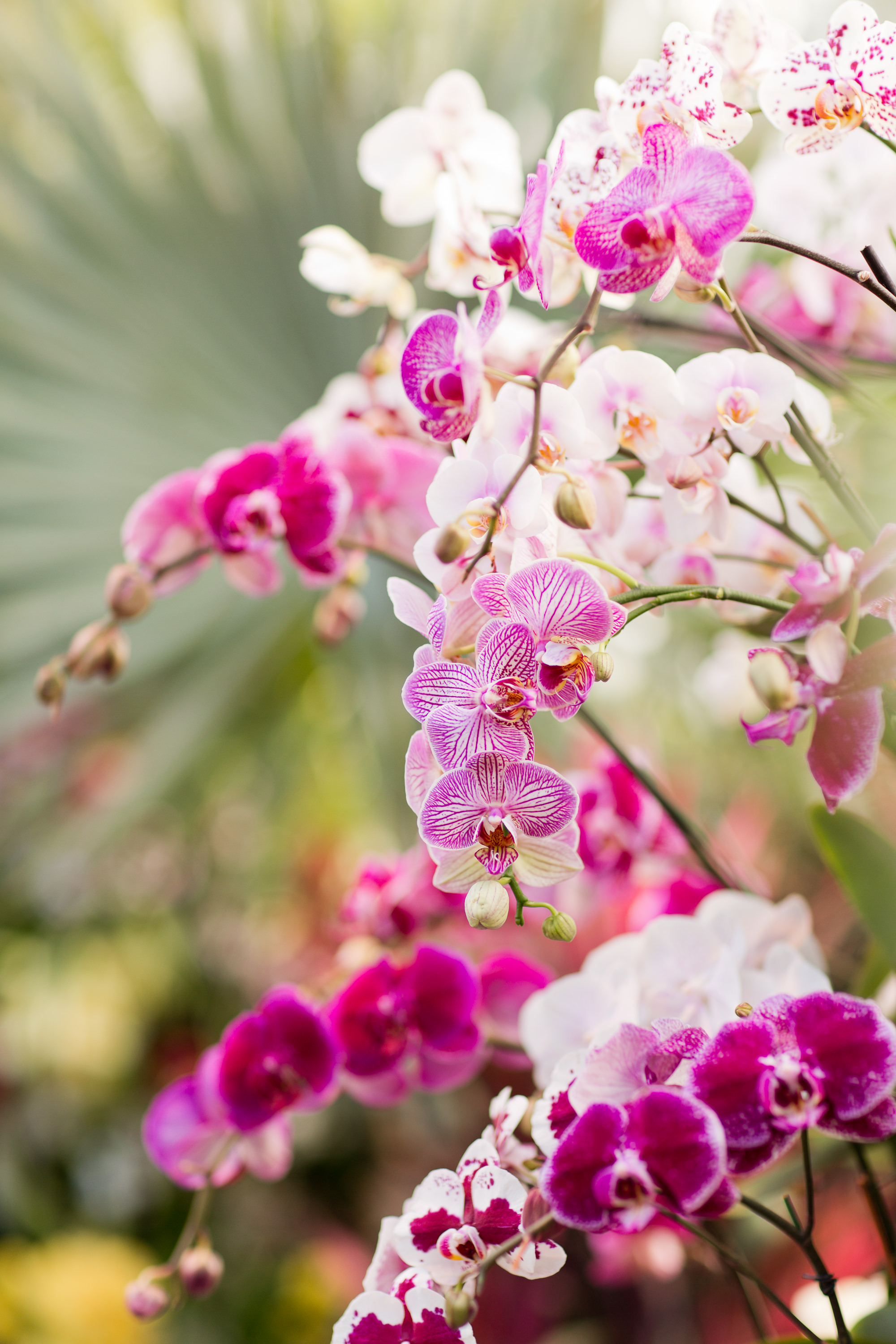 Melissa Kruse Photography - New York Botanical Garden Orchid Show-65.jpg