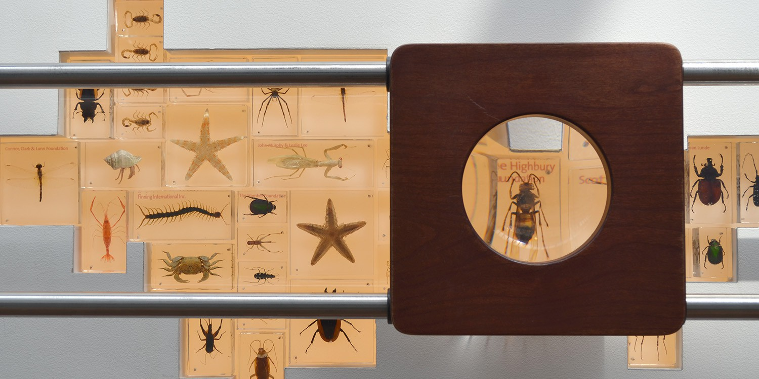 Close-up of donor wall. Donors names are printed on resin-cast insects, to be viewed through a magnifier.