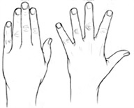 Figure 1: Finger abduction and adduction