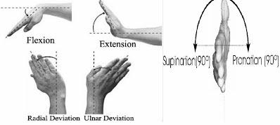 Figure 1 Wrist Motions