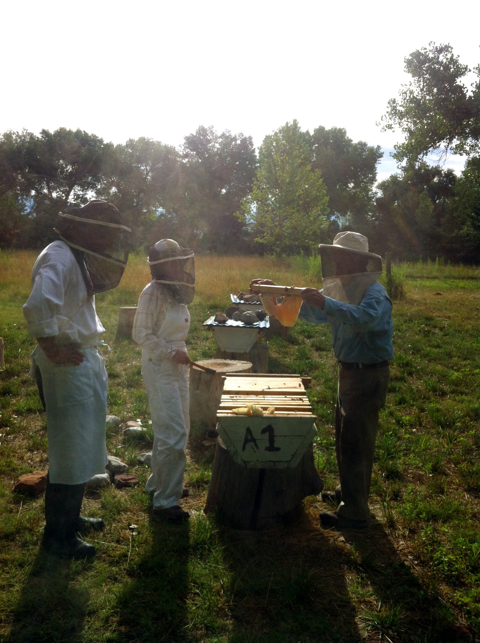 Armin Rembe started keeping bees about ten years ago, after he planted the first lavender fields. Armin says that the hives have a healthy yield because the farm is organic and there are no pesticides used on the property.