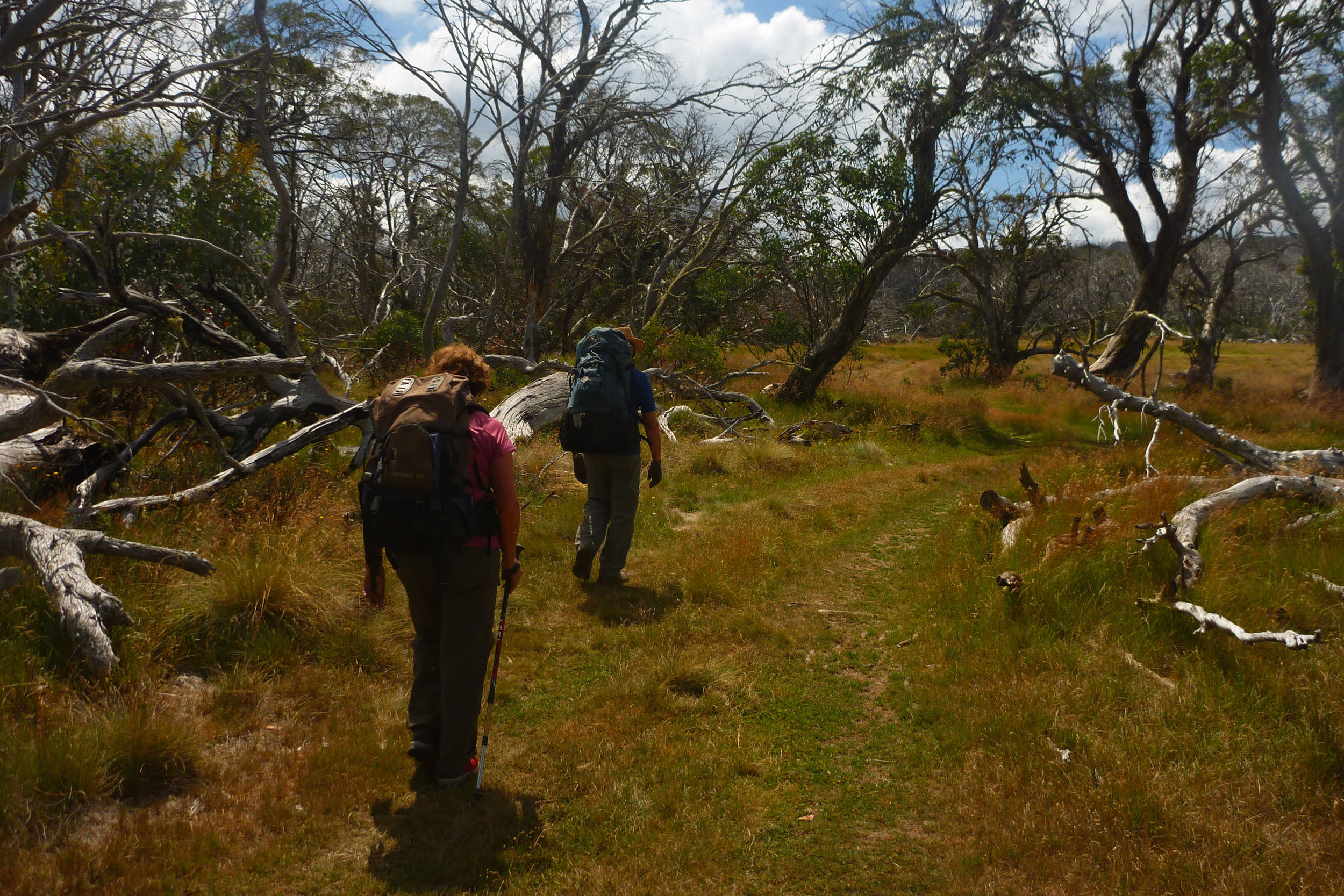 Bushwalking - The pristine High Country is a favourite with bushwalkers and hikers. You can simply go for a wander around the 30 acre Glen Wills property, or there are many trails in the surrounding area.