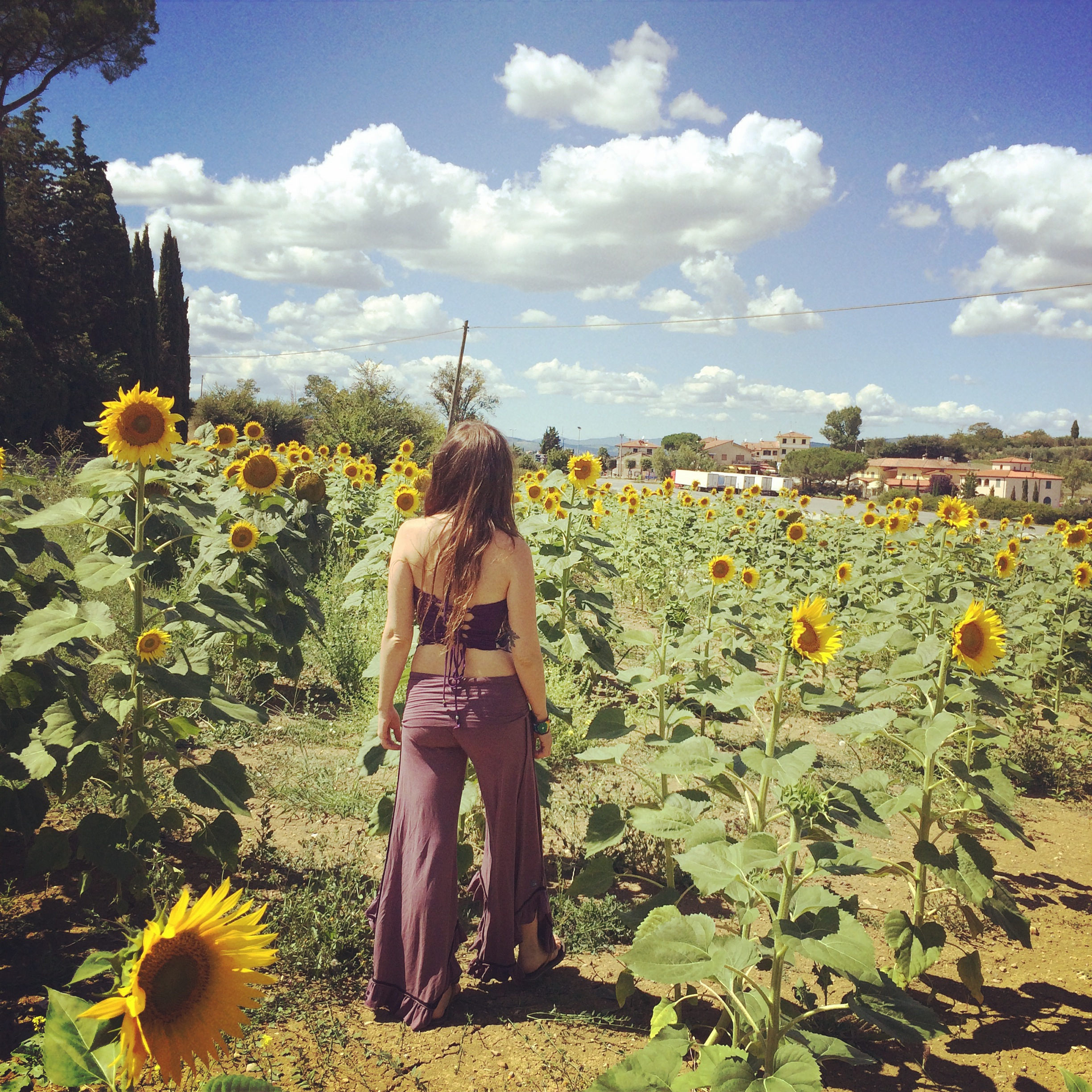 a sunflower field in Tuscany, during a trip with my mother