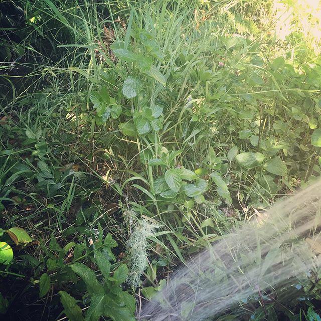 My bones felt thirsty, so I watered the garden.  #reciprocity #mamaearth #feelyou #fullcircle