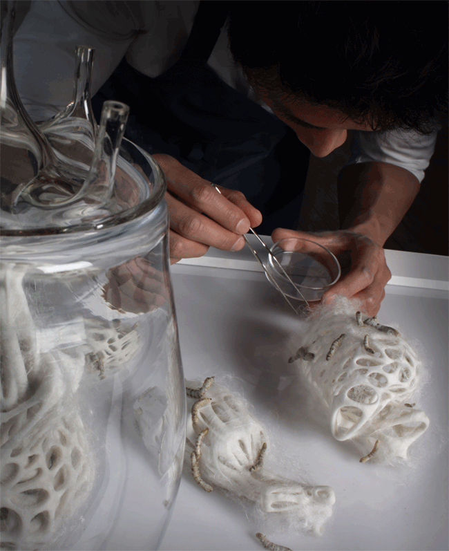Instead of weaving their individual cocoon, the silkworms are programmed to weave collectively the matrix for a donor heart.
