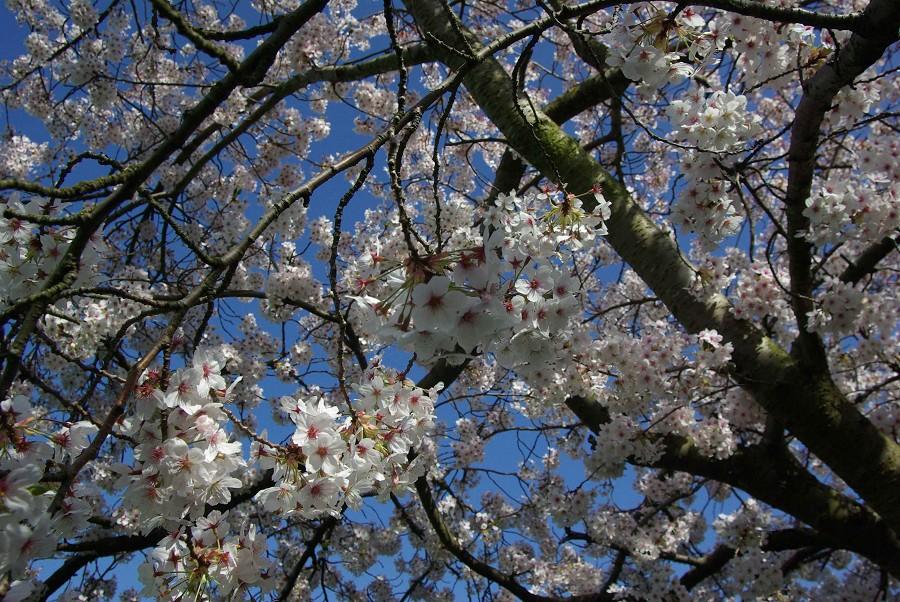 Blossom #2