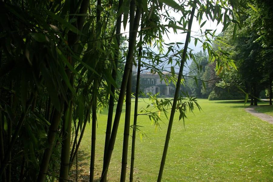 Bamboo and Villa Erbia