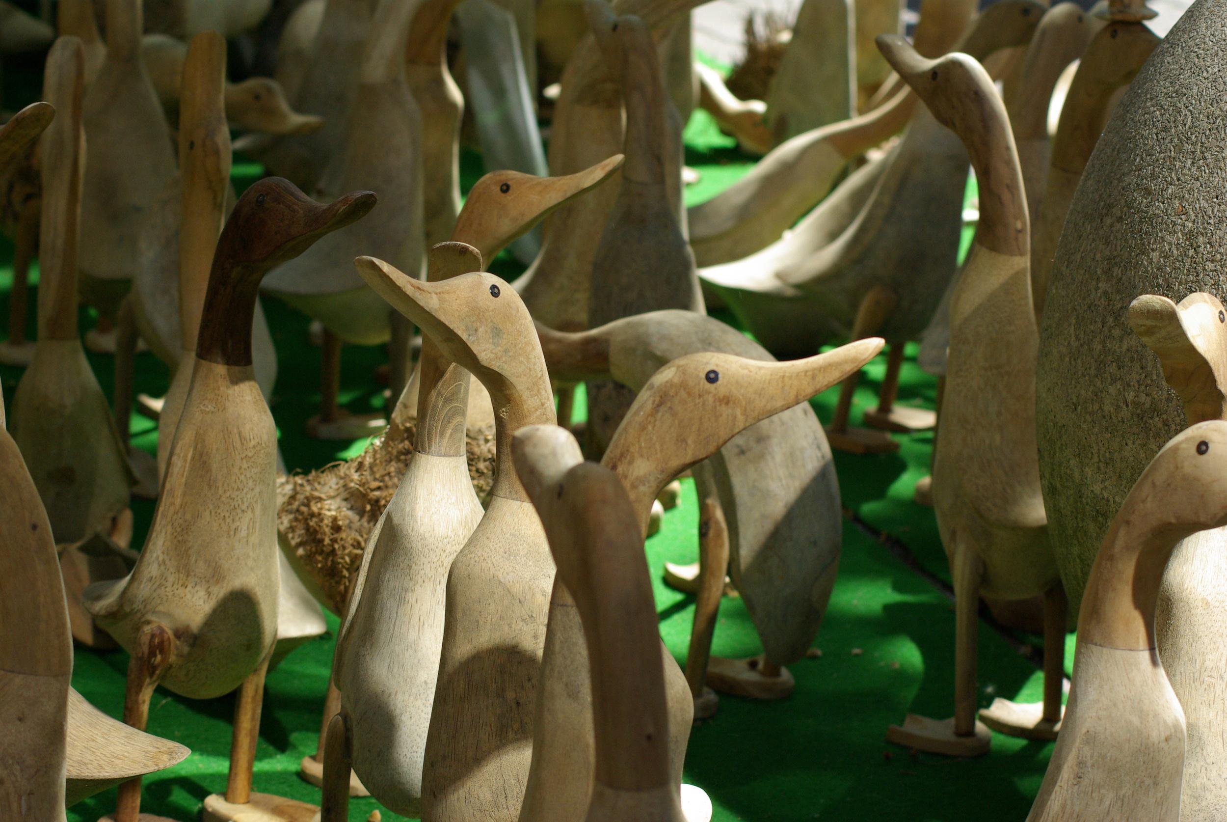 Ducks - Many