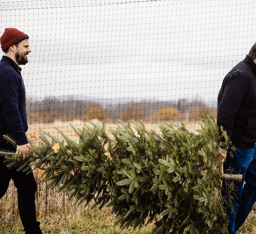 holiday christmas tree farm festive