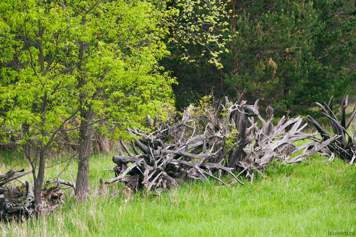 The tree root fences are so structural and appealing - you'll see a lot more of them