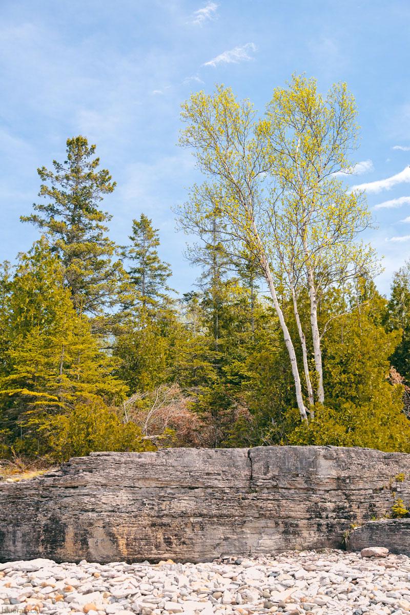 manitoulin-island-ontario-canada-providence-bay-rocky-shore-forest-lake-huron-spring