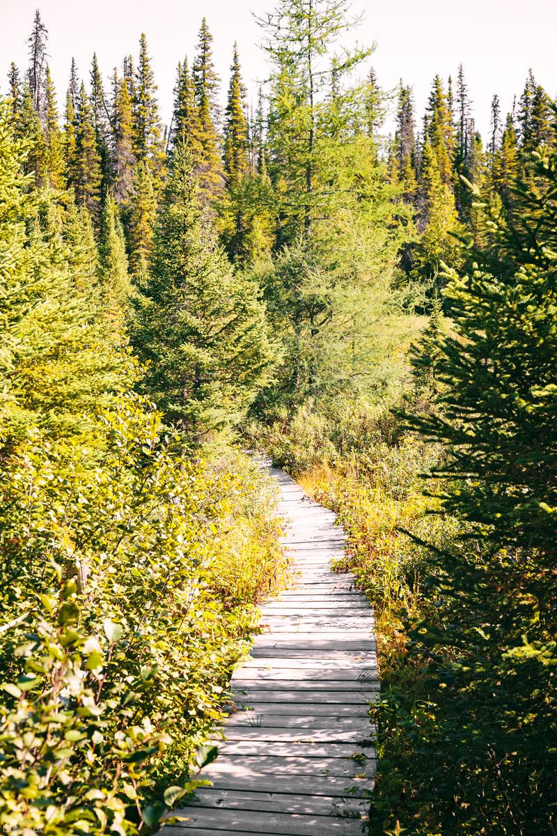 hike-path-trees-churchill-falls-labrador-canada