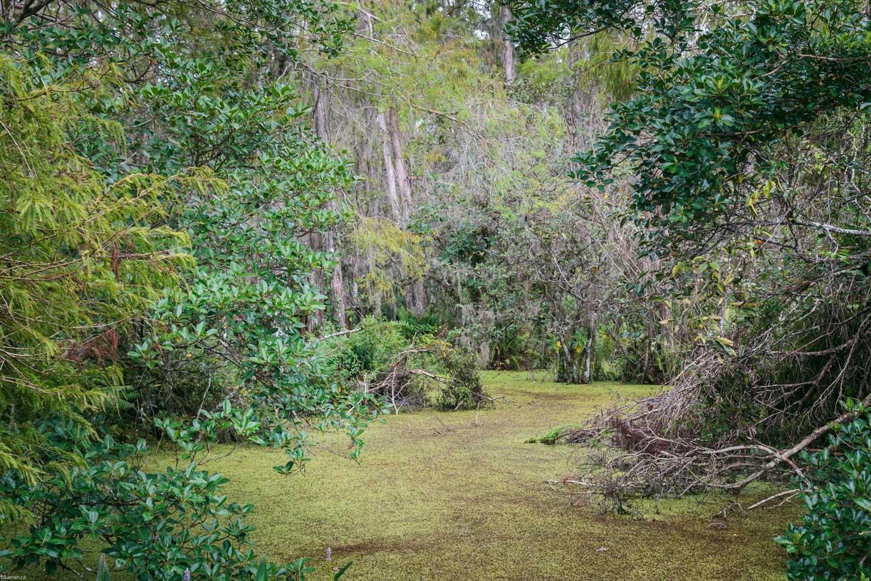 Florida_20171123_0472ae.jpg