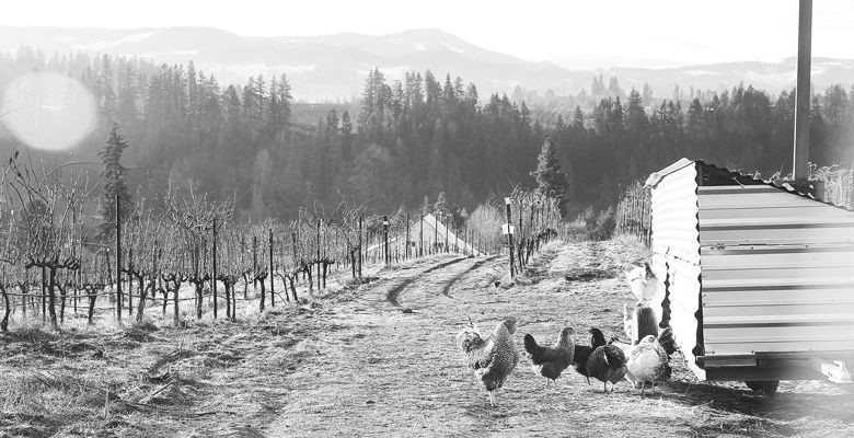 Hiyu Wine Farm