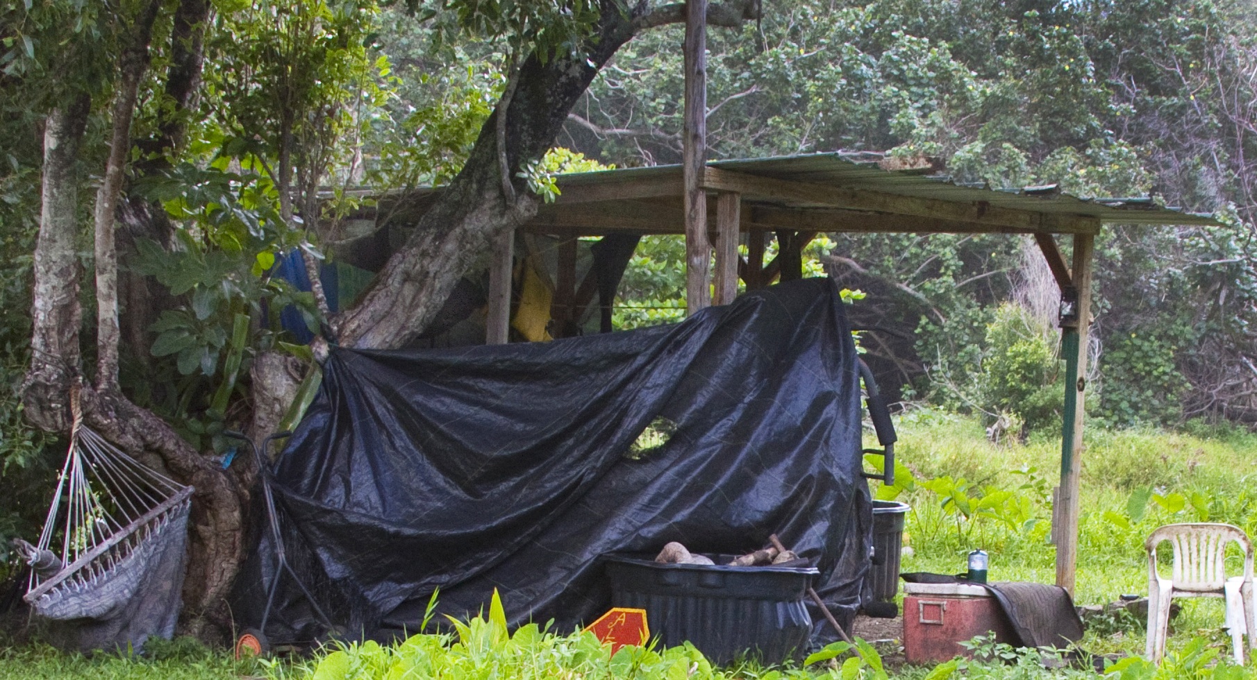 Photo of an actual squatter encampment in Kaua'i (Note the incongruous lawnmower in the lower left)