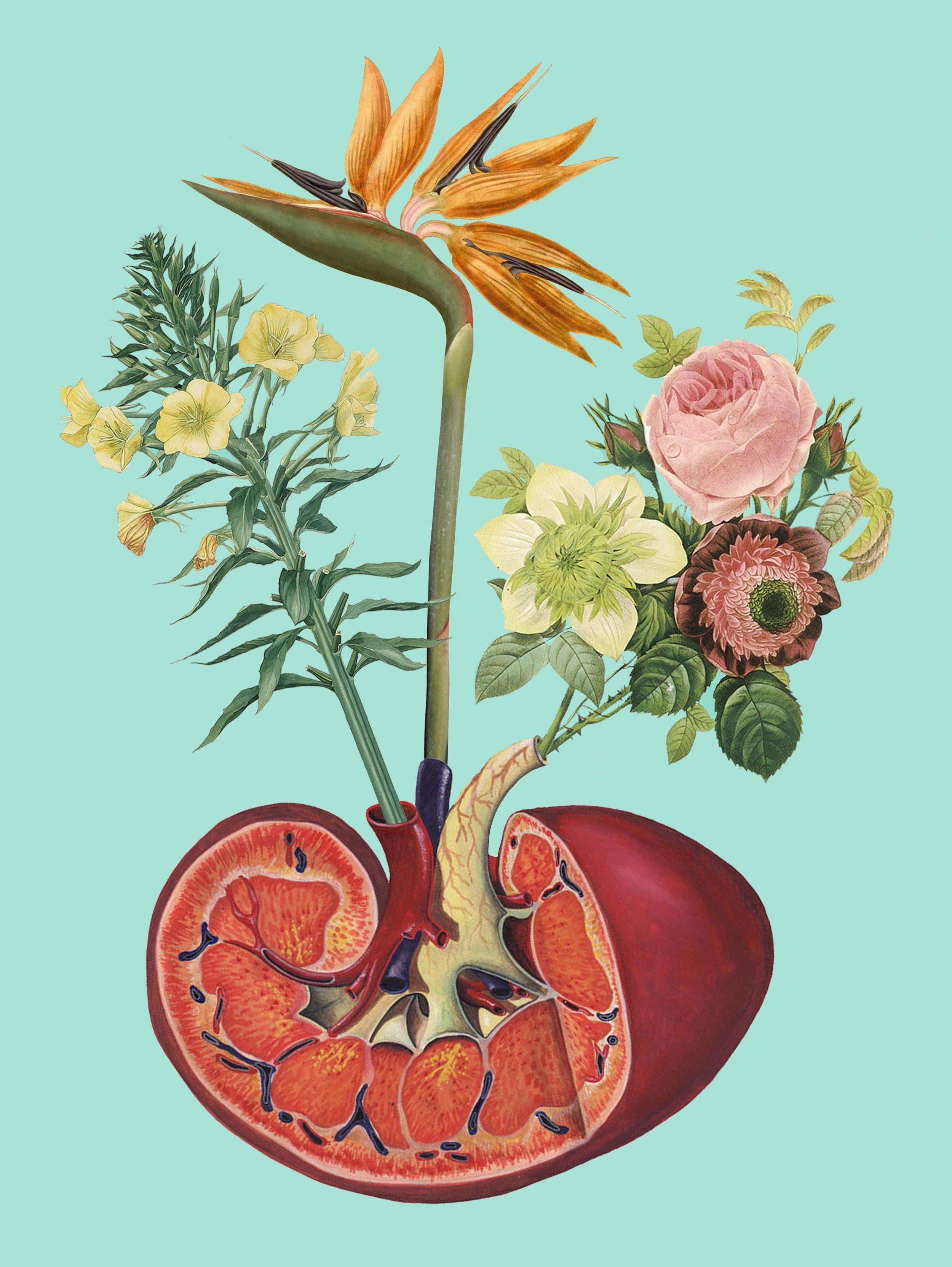 Kidney on Drugs