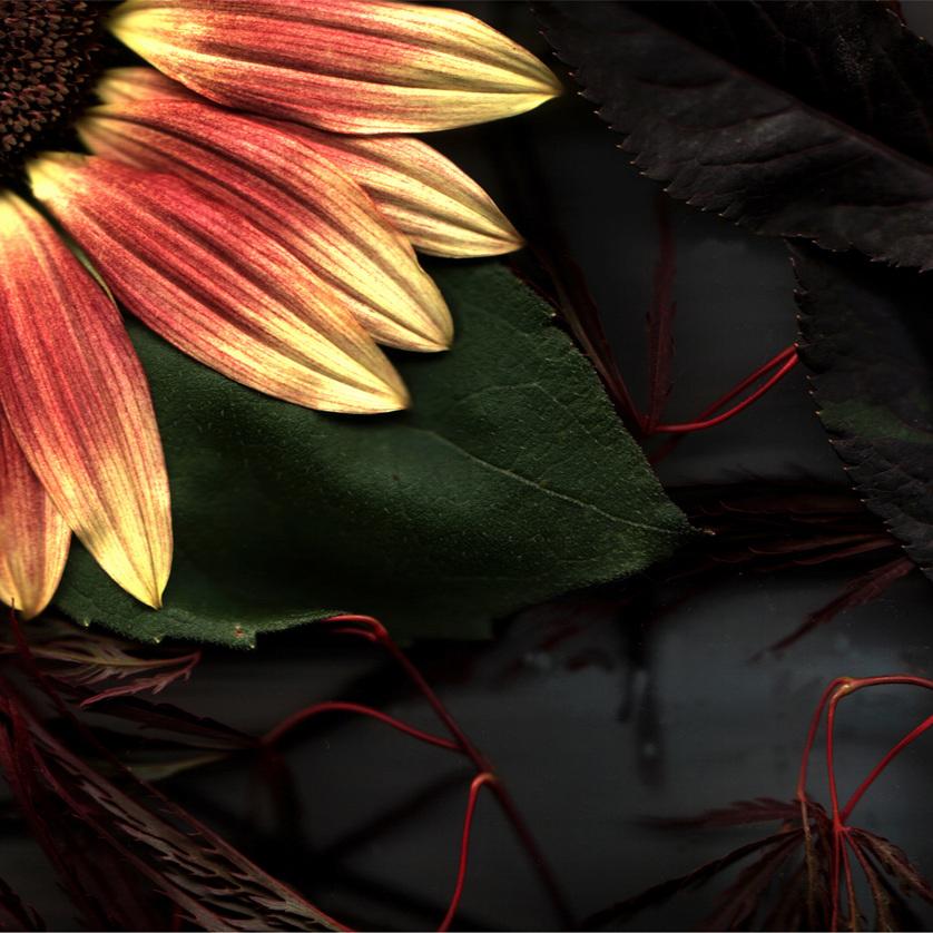 Flower 22 14.jpg