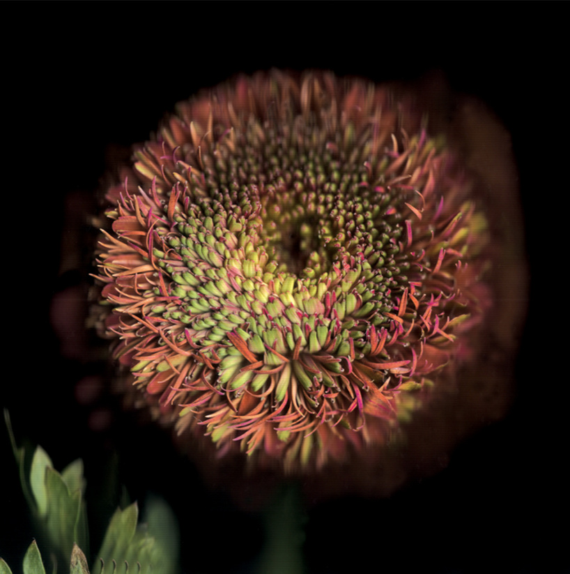 Flower 35 14.jpg