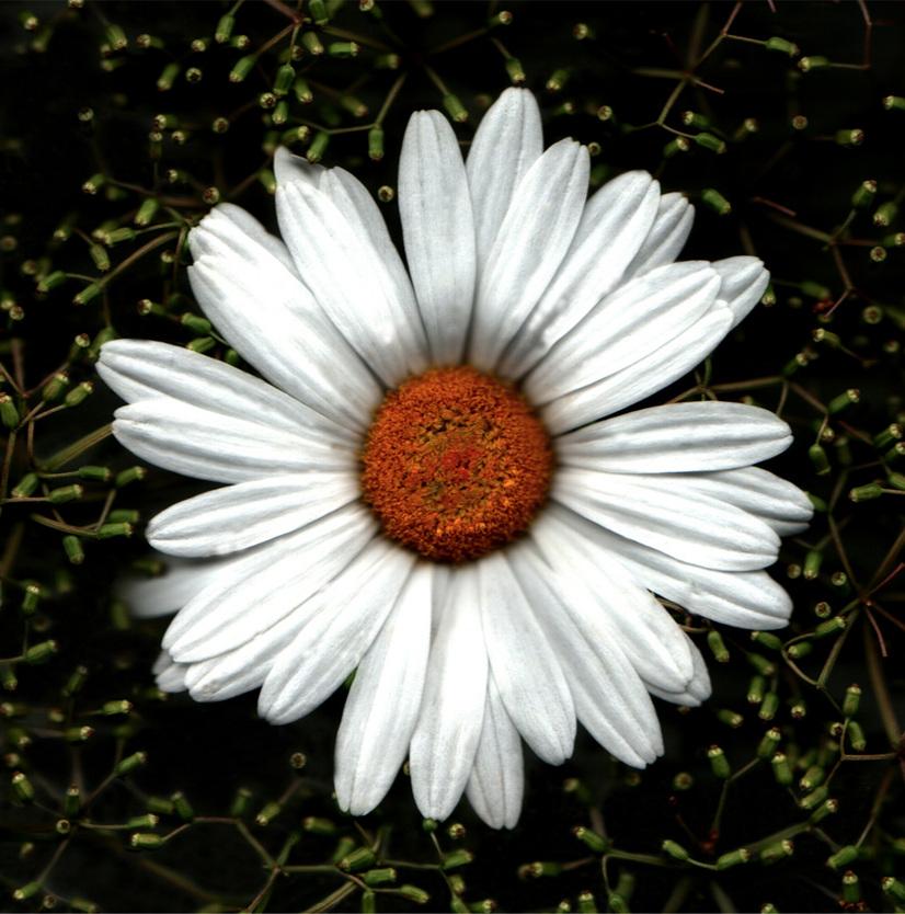 Flower 11 14.jpg