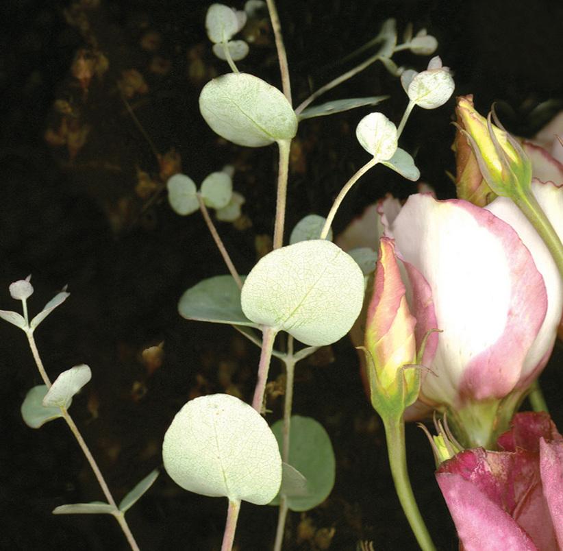 Flower 26 14.jpg