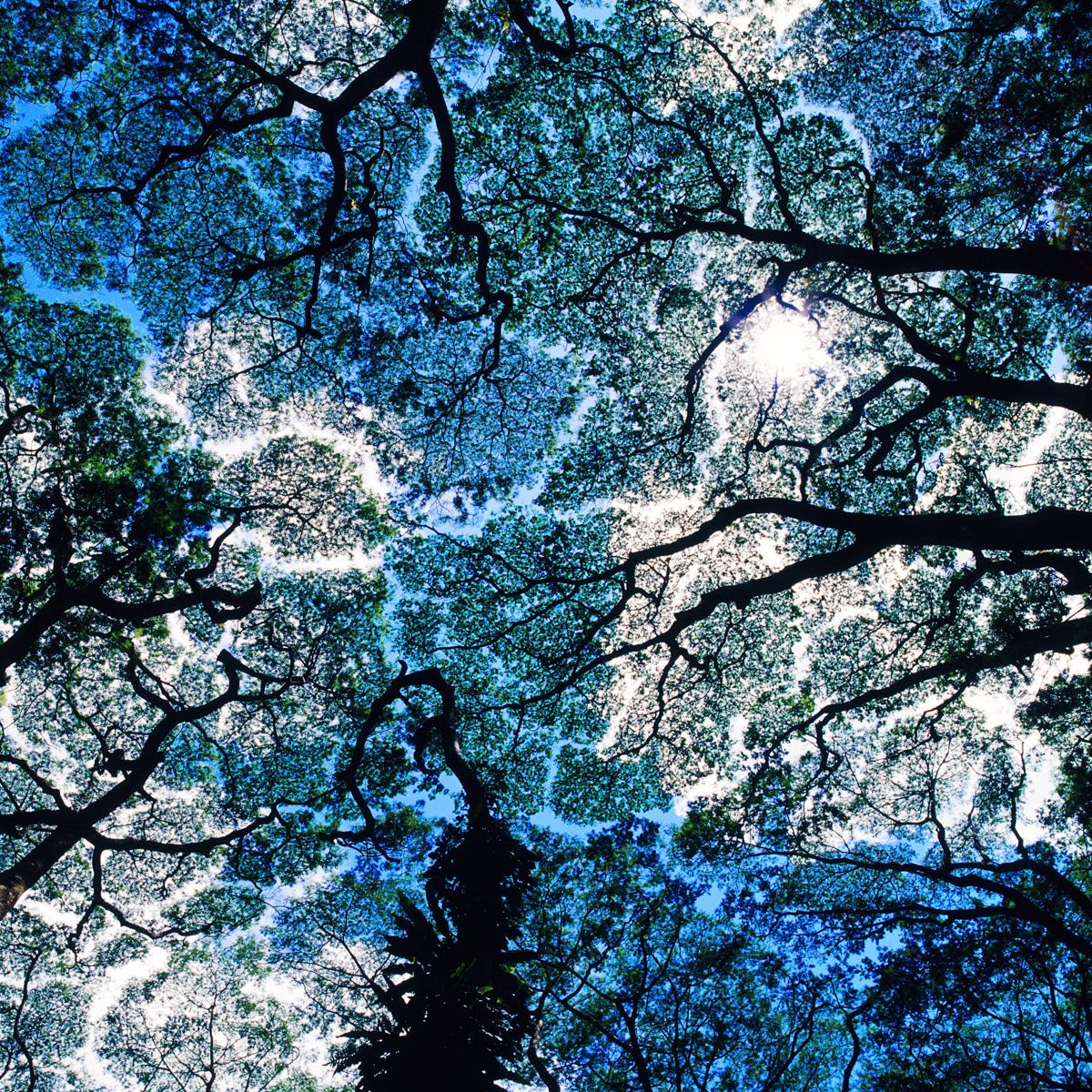 Frame_70-1c.jpg