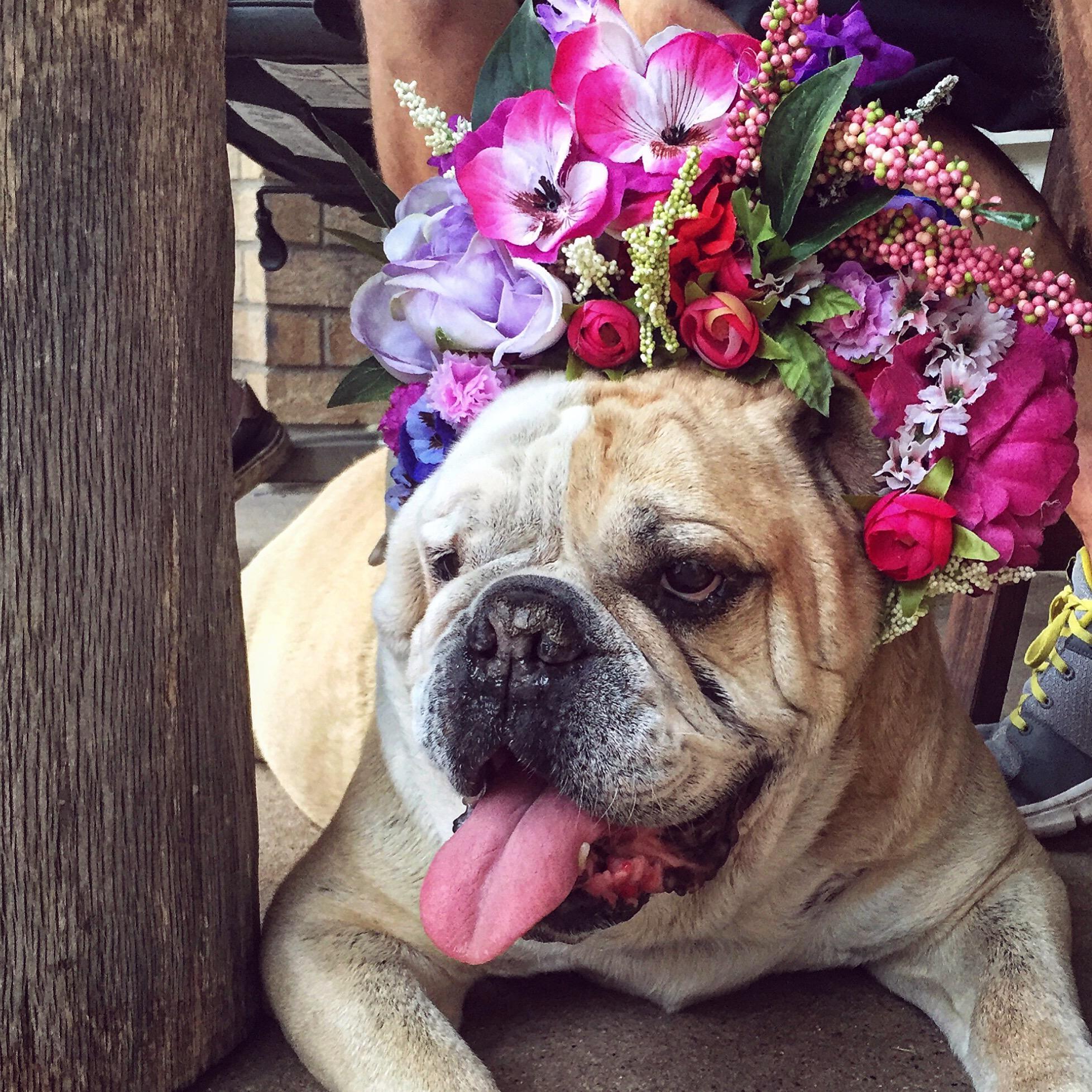 dog flower crown