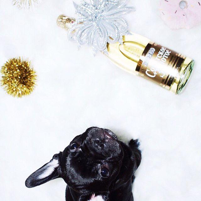 ᴴᴬᴾᴾᵞ ᴺᴱᵂ ᵞᴱᴬᴿ ᵀᴼ ᴬᴸᴸ ᴹᵞ ᴾᴬᴿᵀᵞ ᴾᴱᴼᴾᴸᴱ... 🎉🍾🥂....... #frenchieoftheday #frenchie #frenchiegram #newyearfrenchie #dallasfrenchies #olive #oliveoil #frenchiesofinstagram #happynewyear #2018 #batears #black ⬛️ #champagne #bubbly