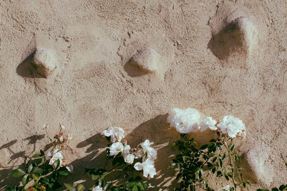 Flowers in Los Angeles