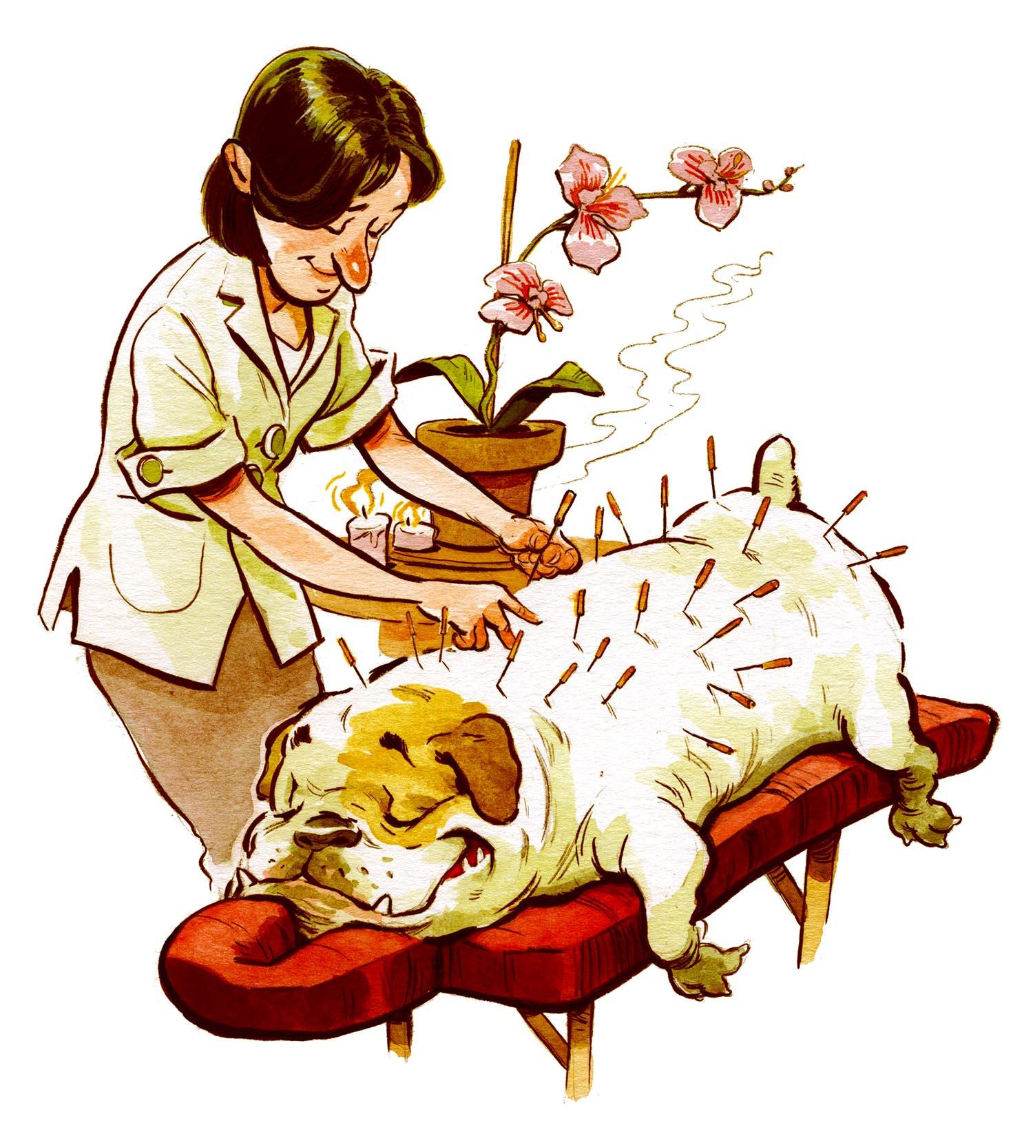 washingtonian_petsacupuncture.jpg