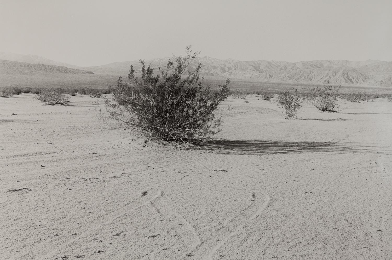 desert-10.jpg