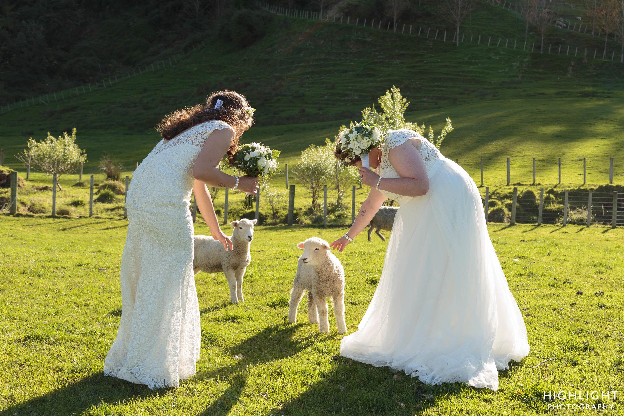 highlight_wedding_photography_makoura_lodge_manawatu_new_zealand-113.jpg