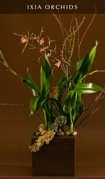 ixiaorchids.jpg