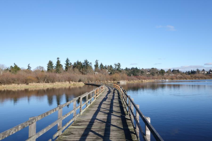 victoria-swan-lake