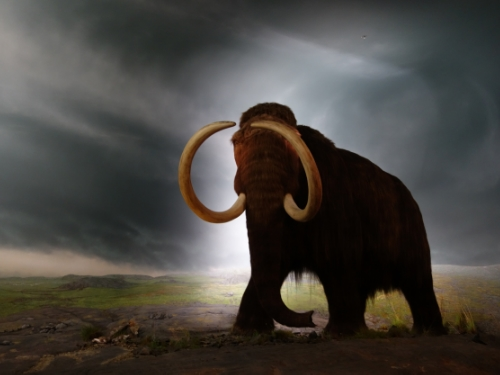 victoria-royal-bc-museum-mammoth