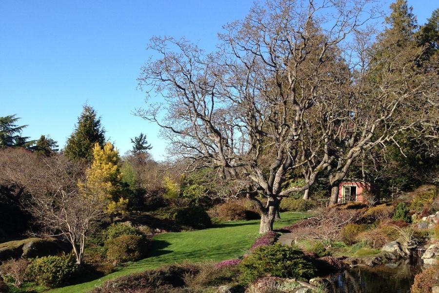 victoria-abkhazi-garden