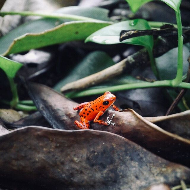 Ok ok, so #earthday was yesterday, but we wanted to celebrate by showing you two of our (Caro and Vanessa's) favourite pictures of nature. Yes, from our private collection. You're welcome. The frog is from Bocas Del Toro. Caro took it during her travels in South America. She just googled it and apparently it's a strawberry poison dart frog, the cousin of the golden poison dart that can kill 10 men (probably only 7 women though, because we're tough as shit). Caro also has another amazing frog shot, the frog is the size of her thumbnail. But she wasn't allowed to post both because that's showing off. My picture is of the spring blossom in Los Angles. Yes, I have a garden membership. No, I'm not 60. It's sometimes hard to find beauty in a city like LA, but when you do, it's pretty spectacular. And I have zero pictures of frogs.  Anyhoo. Earth, hats off. You're fucking awesome and we appreciate you! 👏  #earthday #beanunfucker #frogsrock #sodogardens