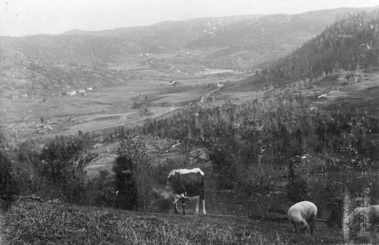 Foto tatt rett nedenfor husene i Lia, ca 1906. Bildet viser Aslaug Jensdatter Ormkleiv (f. 1838 d. 1914) gift med Halvor Andersen Lia (f. 1837 d. 1877), med 2. premiekua.