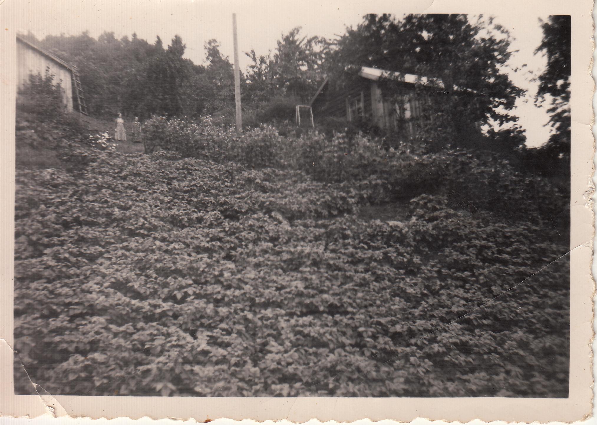 Lia, sett fra sør - Foto er fra ukjent årstall, men etter 1936, funnet i album gitt til Gjerstad Historielag.