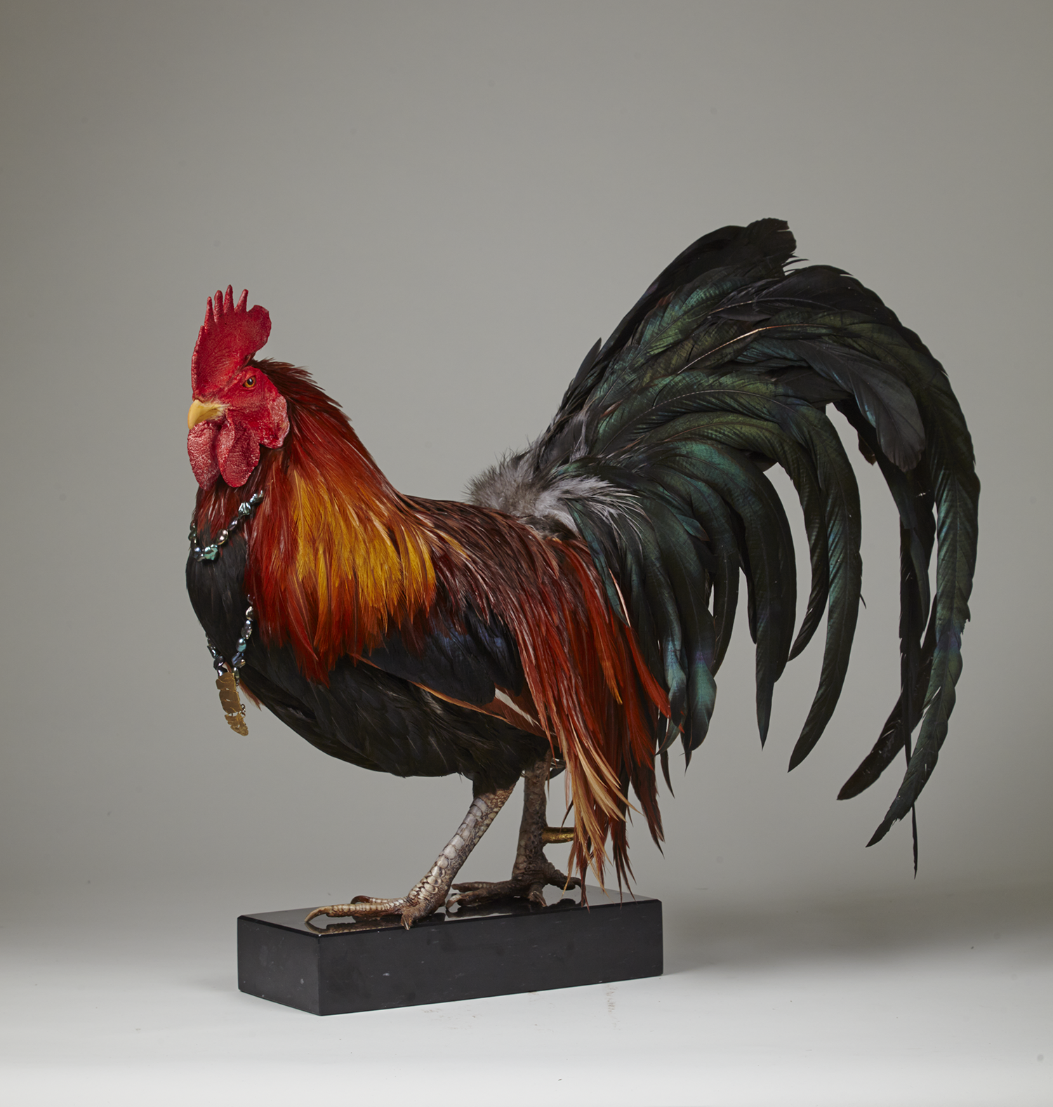 Rooster0158before.png