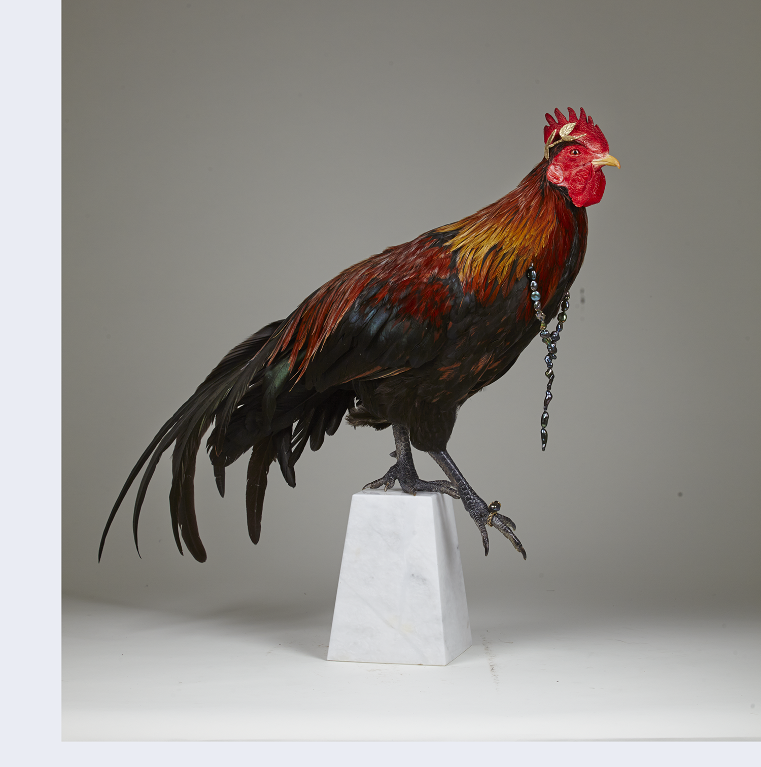 Rooster0247before.png